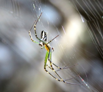 Orb Weaver - White Rock